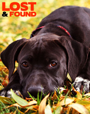 Find or report lost and found pets in the Effingham area